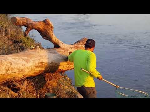 Knights Landing fishing sturgeon