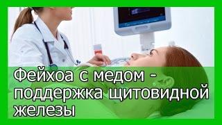 Фейхоа с медом при лечении и профилактике заболеваний щитовидной железы