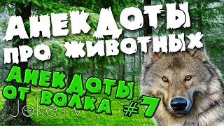 Анекдоты про животных. Анекдоты от Волка #7