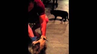 Nathan Peters gets opossum bite