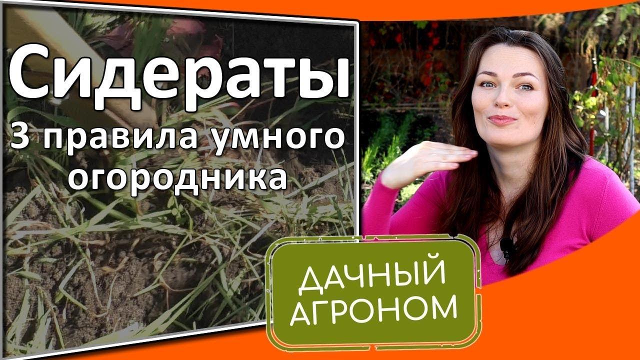 Сидераты: 3 правила умного огородника Заделка сидератов в почву