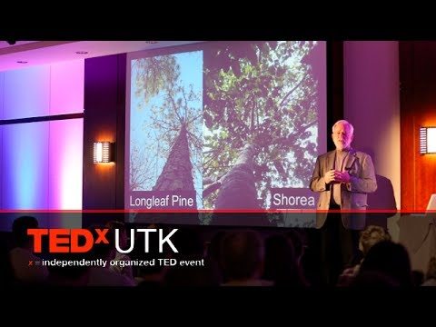 Sherlock, symbols, sacralization -- tree semiotics: Lytton Musselman at TEDxUTK 2014