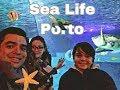 Aquário Porto/ Sea Life/ dia de chuva Porto o que fazer?