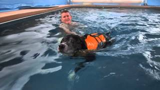 Sweet Little Puppy Dog Learning To Swim