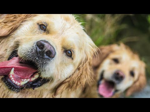 Dog Sitters In Tamworth Other Pet Care Services Animals At Home