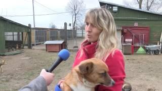 Новости из приюта для животных