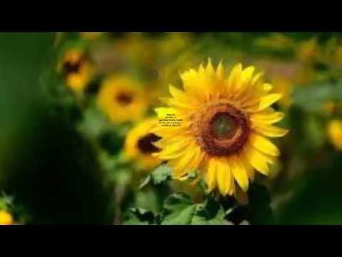 Bom Dia Lindas Imagens E Frases Deus Abençoe Seu Dia Youtube