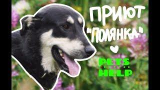 СОБАКИ ПРИЮТА ИЩУТ СЕМЬЮ!! г.Санкт-Петербург