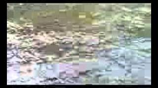 Смотреть Ловля Хищной Рыбы В Низовьях Волги - Ловля Хищной Рыбы Видео(Где взять средства на крутую рыбалку? ОТВЕТ ЗДЕСЬ!!! ЖМИ - http://binaryreview.blogspot.com/ ловля щуки на воблеры видео..., 2015-02-04T08:28:02.000Z)