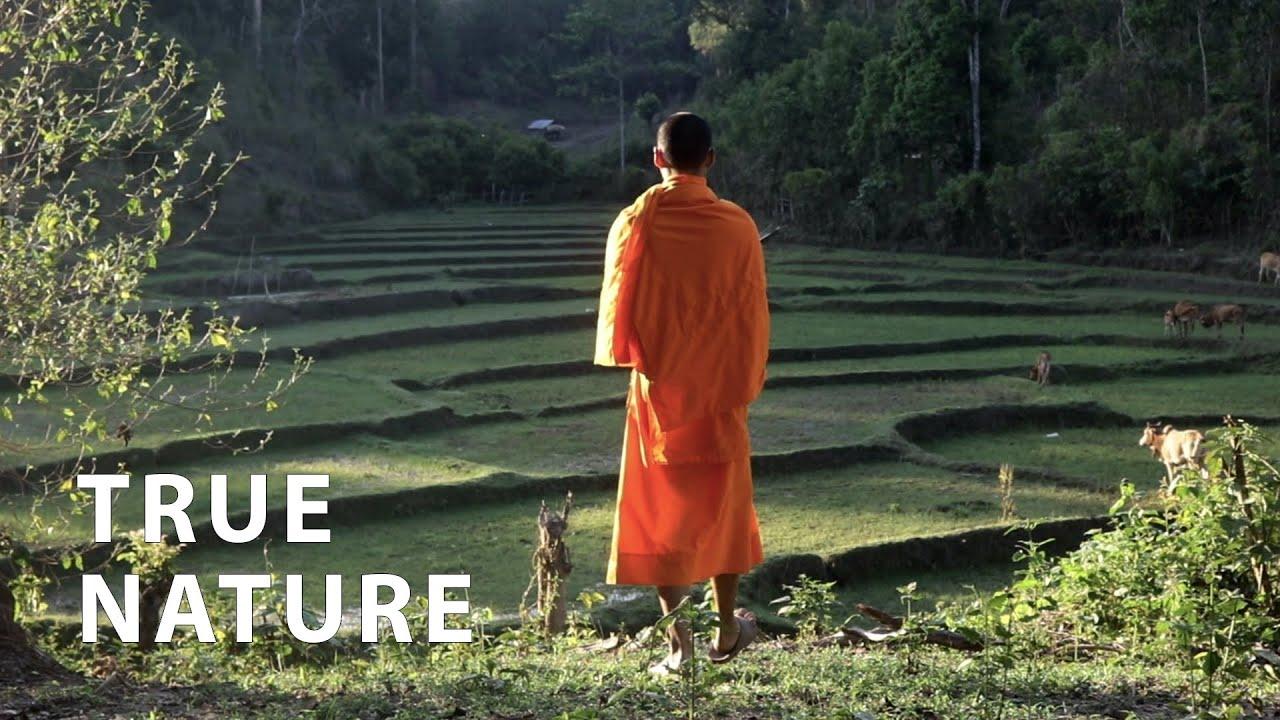 1 KEY Reason People Suffer   A Buddhist Monk Explains
