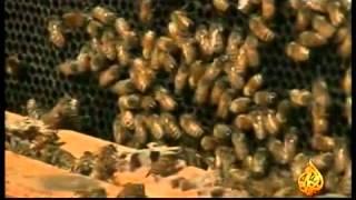 برامج علمية وثائقية حول ظاهرة موت النحل1