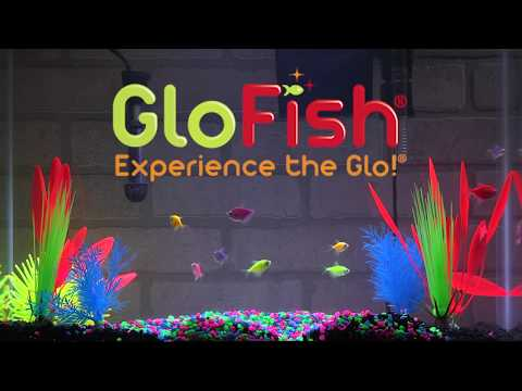 Tetra GloFish® 20-Gallon Aquarium Kit Setup