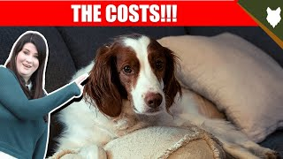 COST OF OWNING BRITTANY