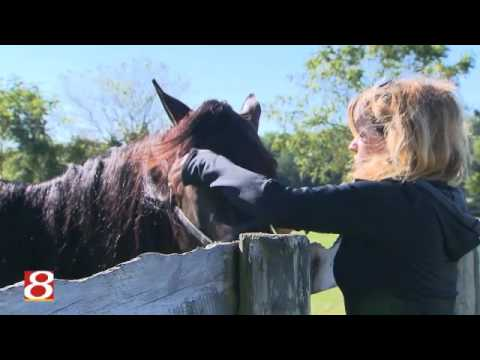 The Measure of a Horse in Emily's Hands