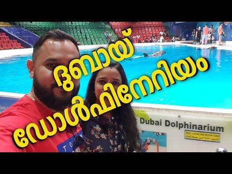 Dubai Dolphinarium ||ദുബായ് ഡോൾഫിനേറിയം||Dolphin & Seal Shows and Creek Park Bird Show