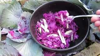 Why Have A Vegetable Garden? - Kohlrabi And Red Cabbage Coleslaw - Mfg 2014