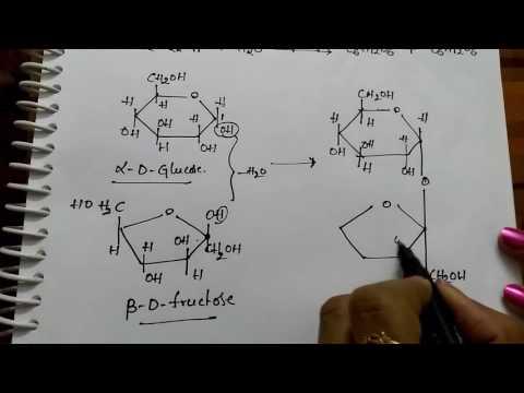 Disachharides Sucrose, Maltose and Lactose (Chemistry)