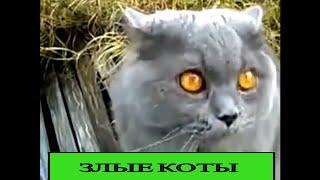 Злые коты, юмор ,приколы, видео