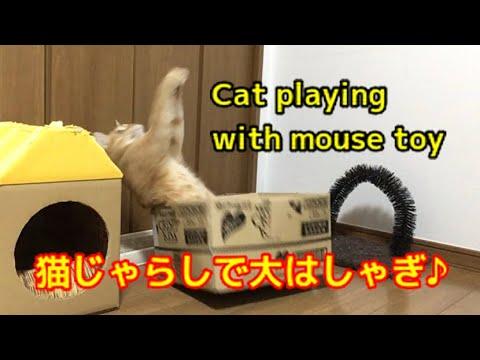 ネズミさんの猫じゃらしで大はしゃぎする猫  Cat playing with mouse toy.