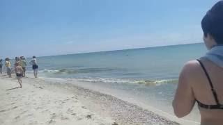 �������� ���� Дельфіни. Більшовик 04.06.2016 ������