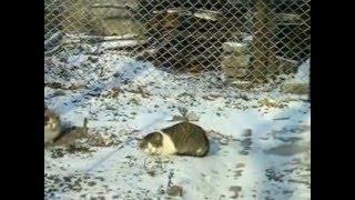 Коты зимой.
