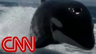 Killer whales surprise couple on boat thumbnail