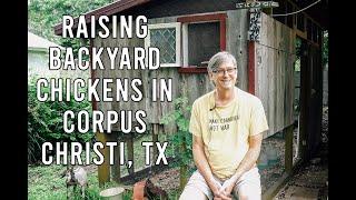 Raising Backyard Chickens in Corpus Christi, TX