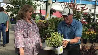 Rosie Darby and Ken Lain Talk About What to Grow for the Fair