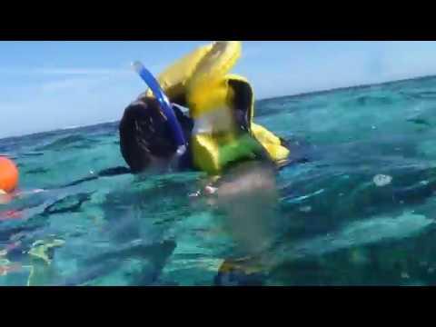 Pacific Jewel, Mystery Island Fish on the Drift Snorkel