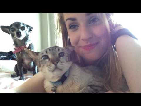 Meet the family, jealous Bug the Chihuahua and Cross-eyed William the Cat.