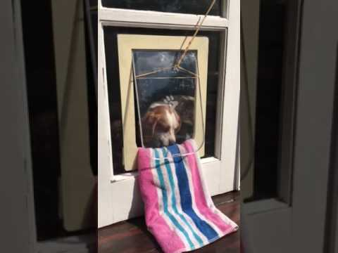 Training your dog to use a doggy door the set-up & Training your dog to use a doggy door the set-up - YouTube Pezcame.Com