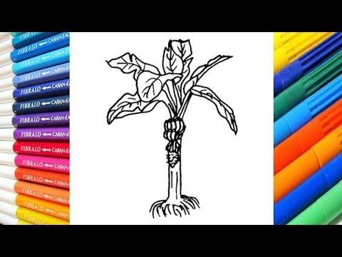 Dibuja y Colorea Platano - Dibujos para Niños - Learn Colors - YouTube