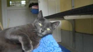 Coral the cat for adoption from The Blue Cross in Cambridge