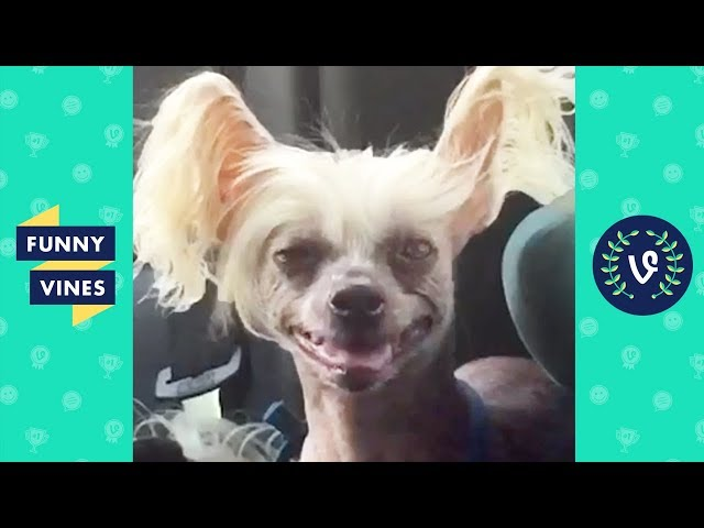 TRY NOT TO LAUGH - Funny Animals That Will Make You Smile!