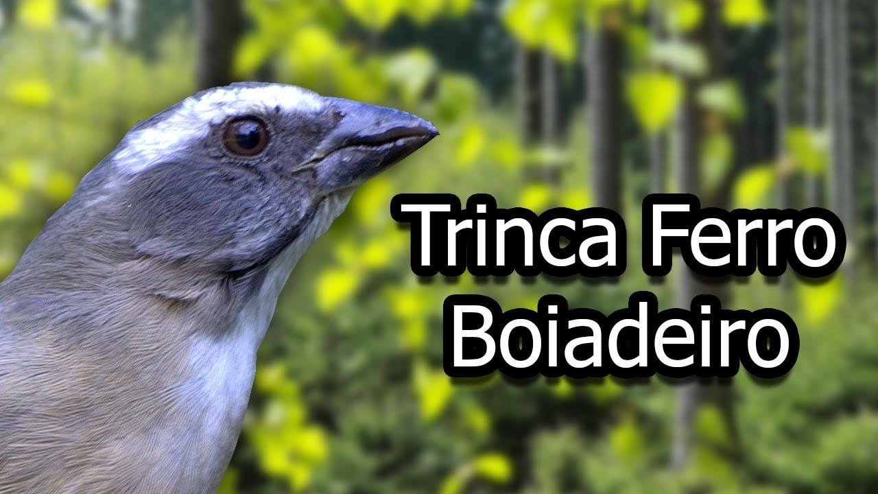 TRINCA BAIXAR FERRO DE PARA CANTO DE CD