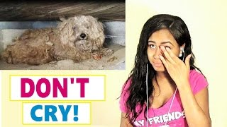 Try Not To Cry: Dog's owner died, he was left behind. Watch what happens next! Reaction
