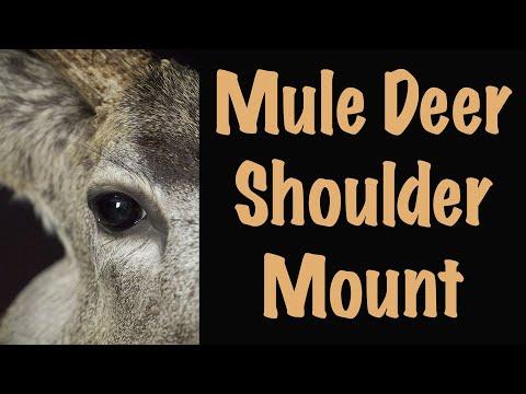 Mule Deer Shoulder mount. Time Lapse Entertainment. Art of Taxidermy.