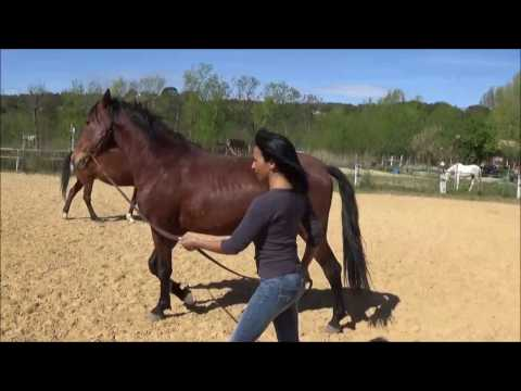 exercices pratiques equitation ethologique pour bien comprendre son cheval