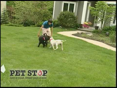 Pet Stop Pet Fence Systems Commercial