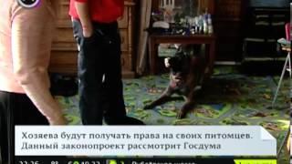Бойцовых собак приравняют к травматическому оружию