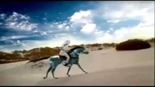 арабская порода лошадей.avi