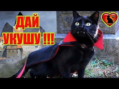 19 Причин, Почему Кошка Кусается?! Как Отучить Кошку Кусаться!