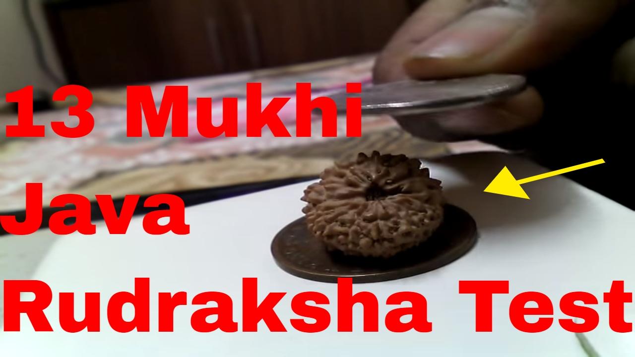 rudraksha test original rudraksha test how to check