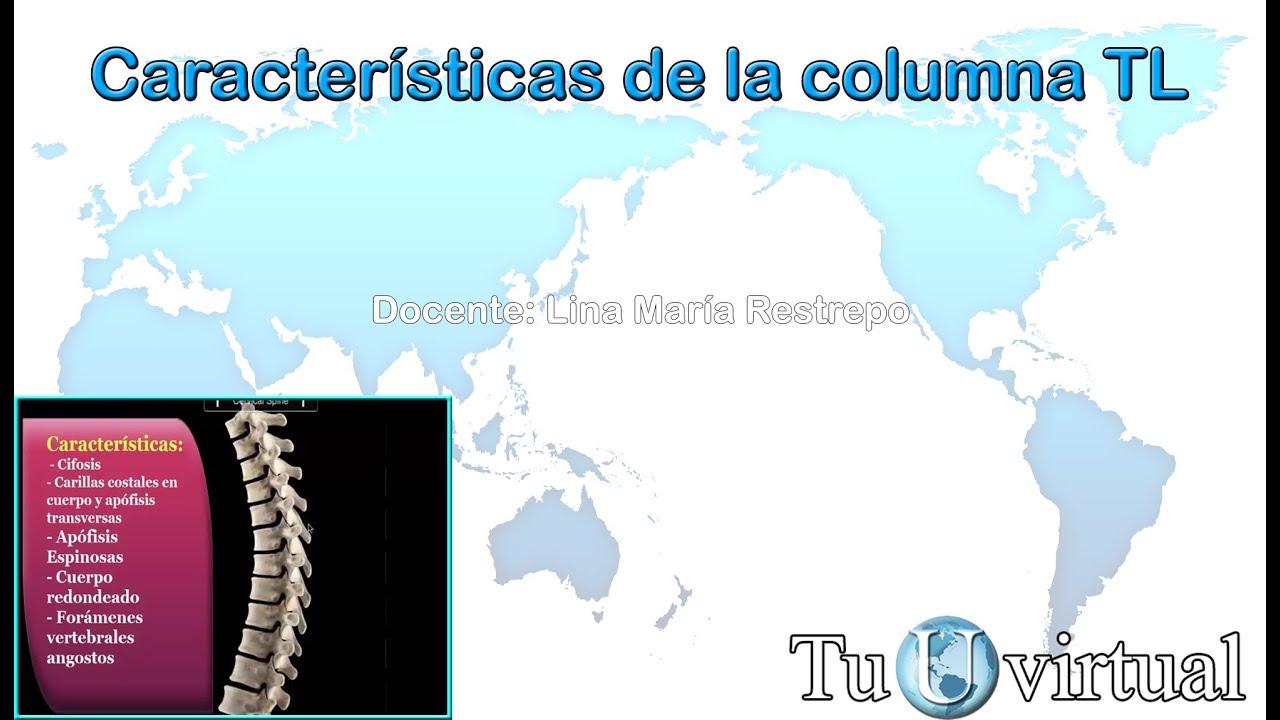 Características de la columna toracolumbar - Columna Vertebral - YouTube