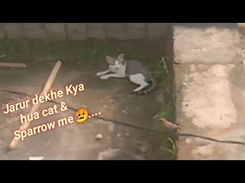 cute baby cat.......