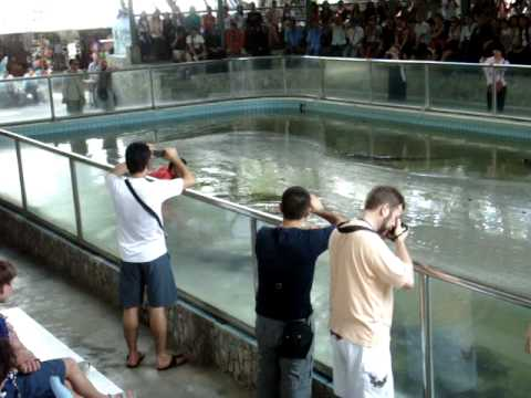 Crocodile farm Show – Pattaya Beach Thailand