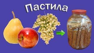 Домашняя пастила из яблок, груш и винограда в сушилке Изидри