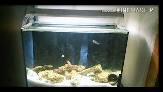 Интерактивный аквариумный туризм Сезон 2 Выпуск 17(Уроки Украинского языка на mfkrus)