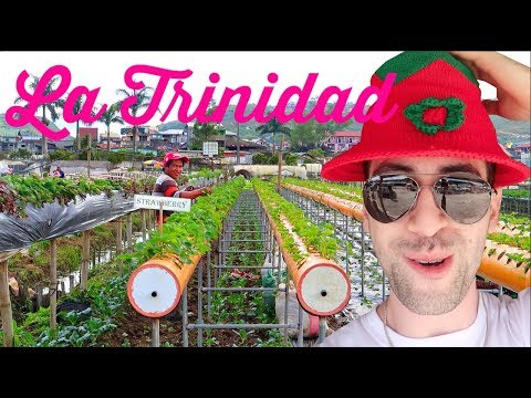 STRAWBERRY Capital of the PH! 🍓MUST SEE UPCLOSE walkthrough of planted FRESH VEGETABLES!!