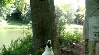 MOV06266 toutoune grimpe sur l'arbre